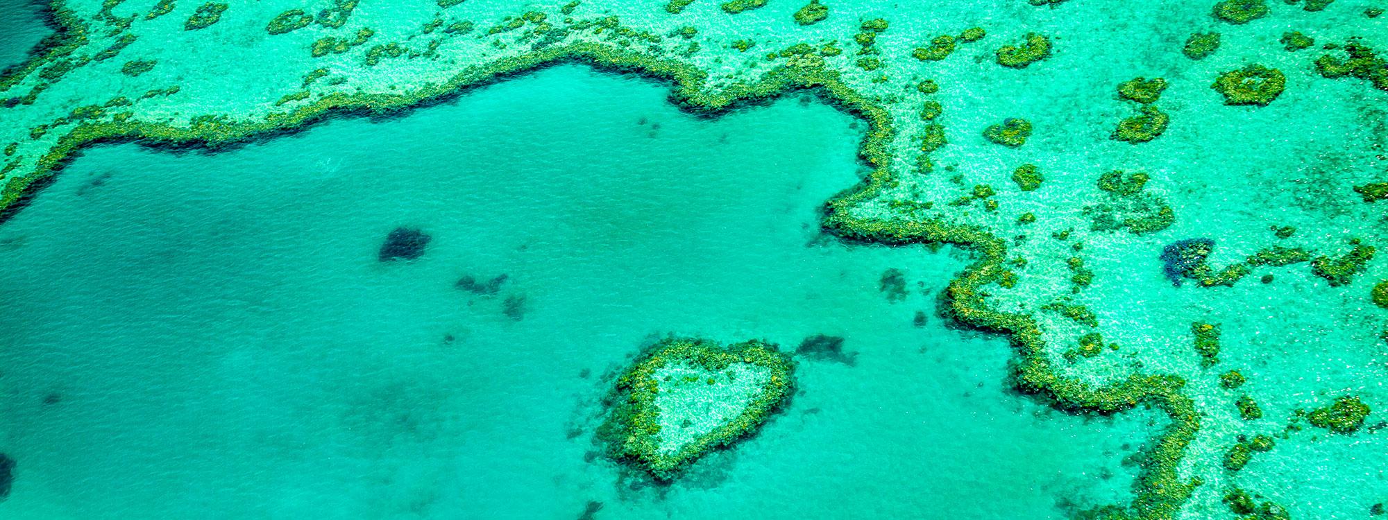 1301190115.jpg-heart-reef-banner-2000