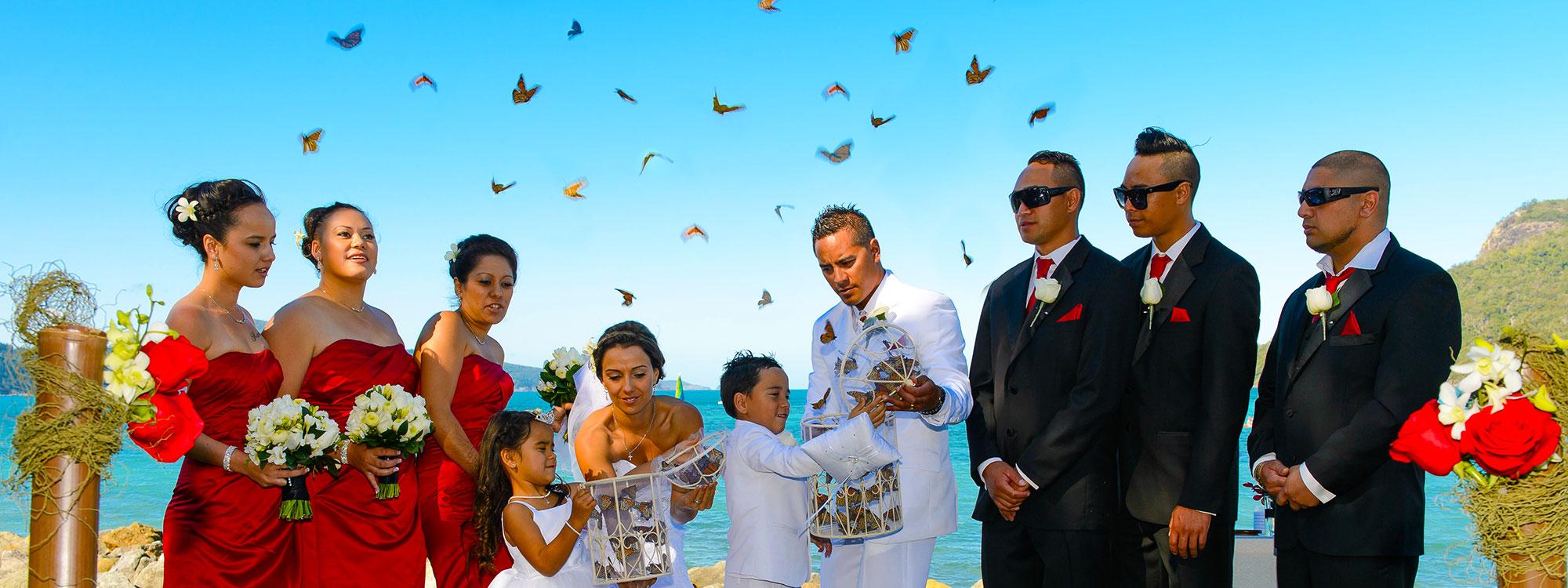 1408310088.jpg-butterfly-release-banner-2000