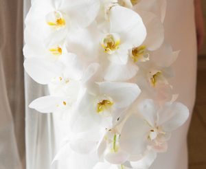 Flowers - 1810170149